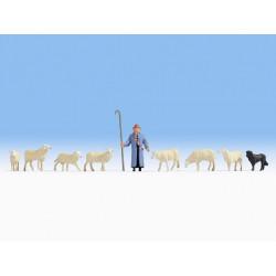 HO / Berger et moutons