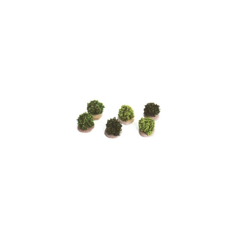 6 buissons verts assortis