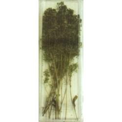 Mini feuilles réalisation de buissons