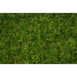 Master Mélange d'herbes : Pré d'été