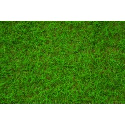 Herbe de champs - vert clair