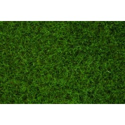 Herbes Sauvages Vert Clair - 6 mm