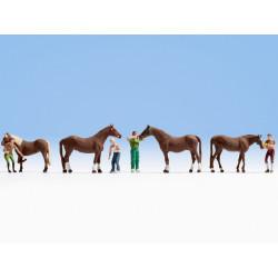 HO/ Soin de cheval