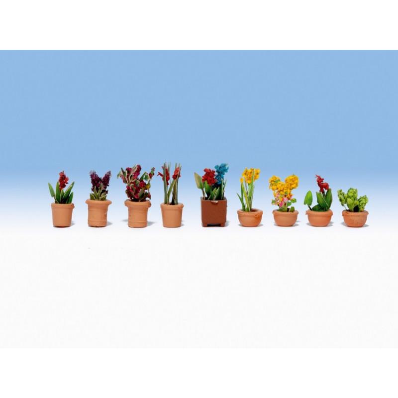 N/ Fleurs en pots